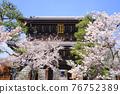 temple gate, cherry blossom, cherry tree 76752389