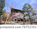 temple gate, cherry blossom, cherry tree 76752391