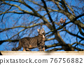 tabby cat standing on roof top outdoors 76756882