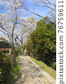 philosopher's walk, lake biwa canal, kyoto 76759611