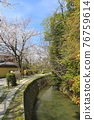 philosopher's walk, lake biwa canal, kyoto 76759614