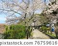 philosopher's walk, lake biwa canal, kyoto 76759616