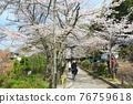 philosopher's walk, lake biwa canal, kyoto 76759618
