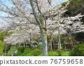philosopher's walk, lake biwa canal, kyoto 76759658