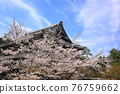 nanzenji temple, kyoto, cherry blossom 76759662