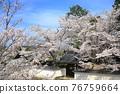 nanzenji temple, kyoto, cherry blossom 76759664