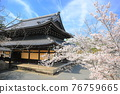 nanzenji temple, kyoto, cherry blossom 76759665