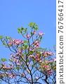 Hanamizuki in full bloom (N) 76766417