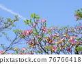 Hanamizuki in full bloom (N) 76766418