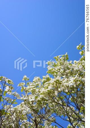Hanamizuki in full bloom (N) 76766565