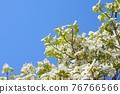 Hanamizuki in full bloom (N) 76766566