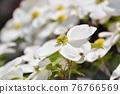 Hanamizuki in full bloom (N) 76766569