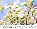 Hanamizuki in full bloom (N) 76766570