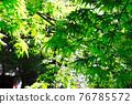 green, verdure, moss 76785572