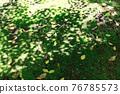green, verdure, moss 76785573