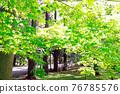 verdure, wood, garden 76785576