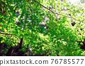 verdure, wood, garden 76785577
