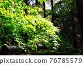 verdure, park, parks 76785579