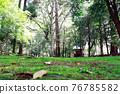 verdure, park, parks 76785582
