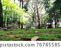 verdure, park, parks 76785585