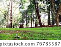park, parks, forest 76785587
