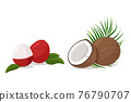 Tropical fruit lychee and coconut isolated on white background. Fresh exotic plants vector illustration. 76790707