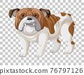 Brown white bulldog in standing position cartoon character isolated on transparent background 76797126