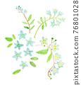 水彩畫 水彩 植物 76801028