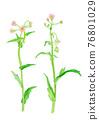 水彩畫 植物 植物學 76801029