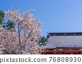 神殿 櫻花 櫻 76808930