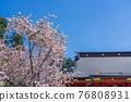 神殿 櫻花 櫻 76808931
