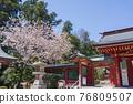 神殿 櫻花 櫻 76809507