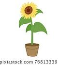 bloom, blossom, blossoms 76813339