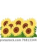 bloom, blossom, blossoms 76813344
