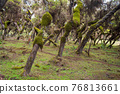 Harenna Forest biotope in Bale Mountains, Ethiopia 76813661