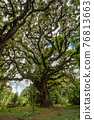 Harenna Forest biotope in Bale Mountains, Ethiopia 76813663