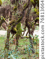 Harenna Forest biotope in Bale Mountains, Ethiopia 76813664