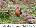 bird Rouget's Rail, Bale Mountain Ethiopia 76813672