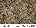 겨울, 잔디밭, 시들다 76815091
