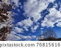 나무, 고목, 마른 가지 76815616