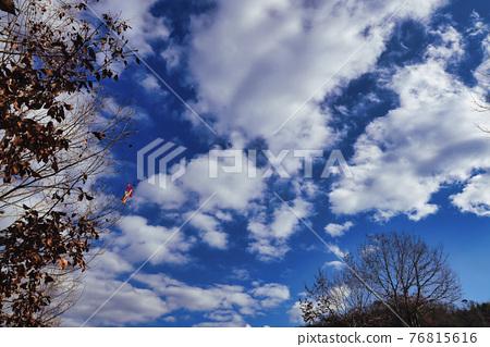 겨울 맑음 하늘과 시든 나무에 얽힌 연을 촬영 76815616