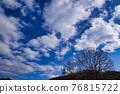하늘, 구름, 고목 76815722