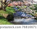 Kanonji河上的櫻花樹(福島縣?豬苗代町) 76816671