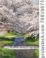 Kanonji河上的櫻花樹(福島縣?豬苗代町) 76816673