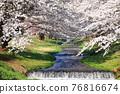 Kanonji河上的櫻花樹(福島縣?豬苗代町) 76816674