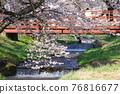 Kanonji河上的櫻花樹(福島縣?豬苗代町) 76816677
