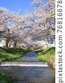 Kanonji河上的櫻花樹(福島縣?豬苗代町) 76816678