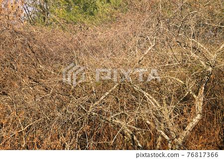 겨울 공원에서 찾아낸 나무의 복잡하게 얽힌 지점을 촬영 76817366