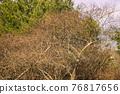 나무, 소나무, 솔방울 76817656