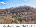 나무, 산, 소나무 76817811